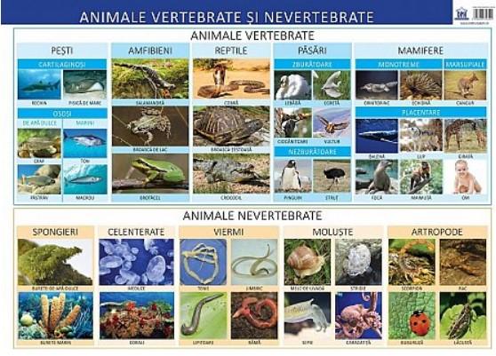 Plansa - Animale vertebrate si nevertebrate