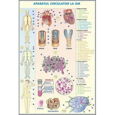 Sistemul circulator la om - Sistemul circulator la animale. Plansa DUO.